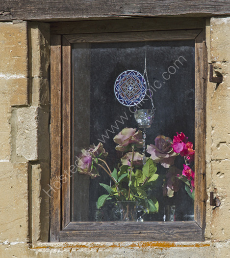 Roses in the Window