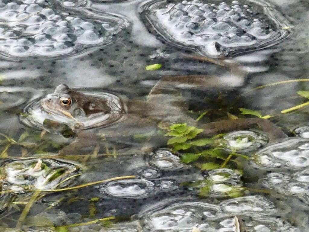 Frog, Spiceball Park