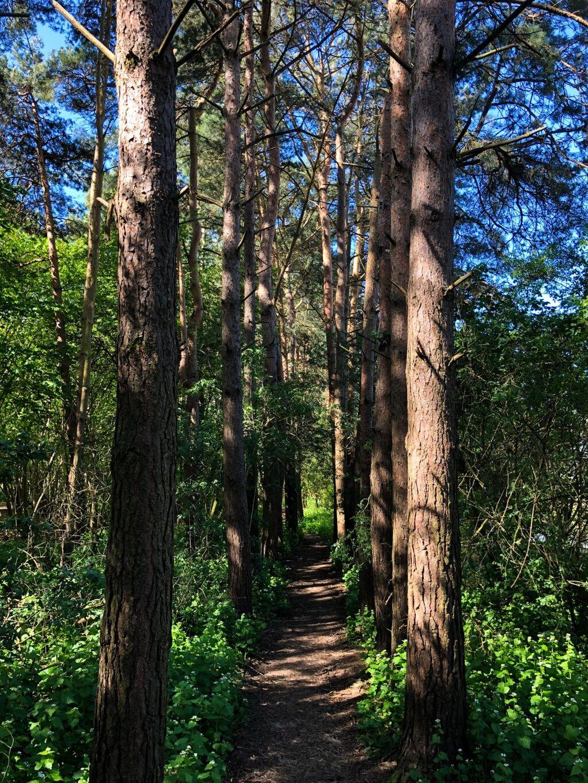 Grimsbury Woodland Nature Reserve 1
