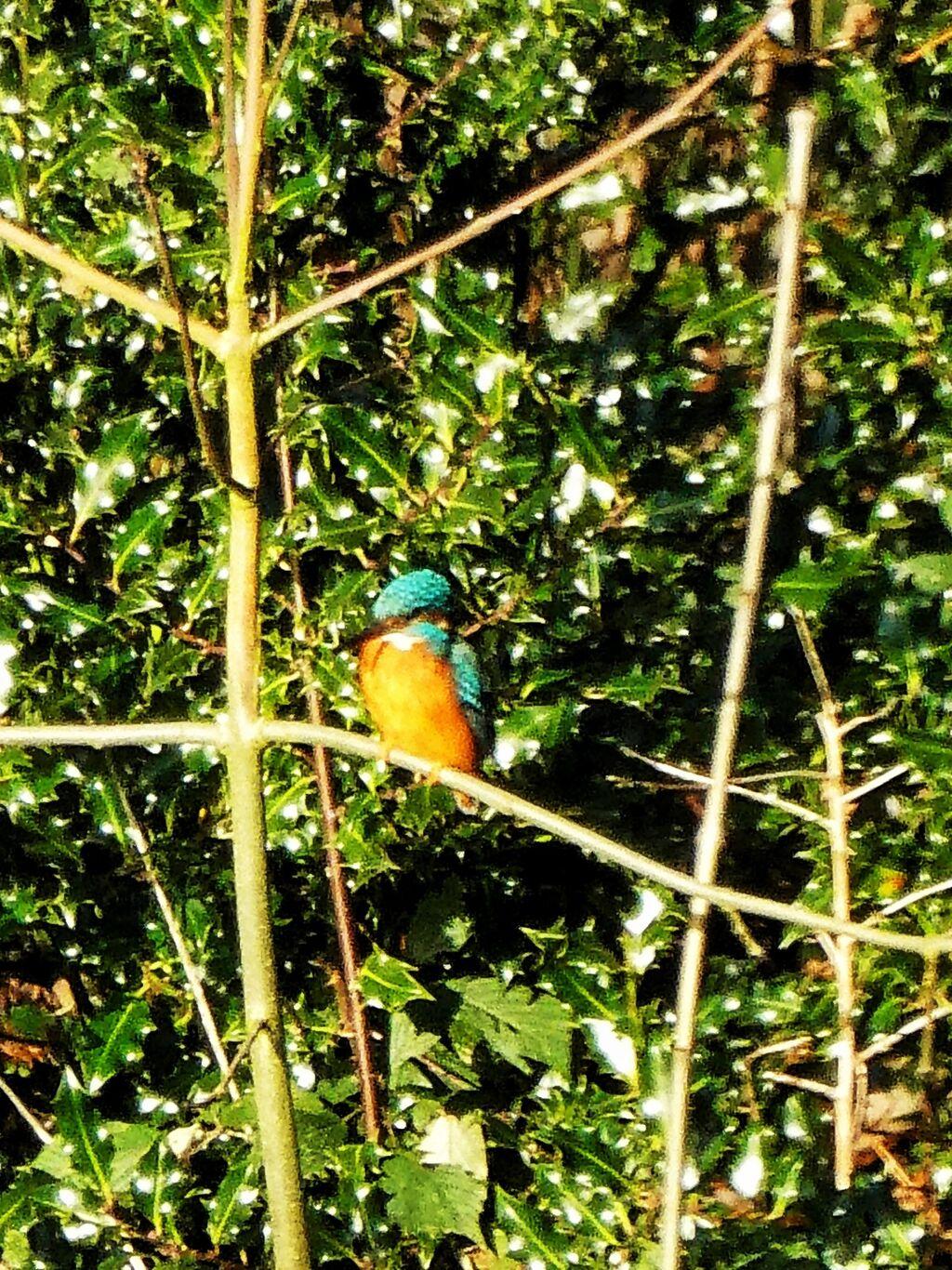 Kingfisher No. 11 @ Farnborough