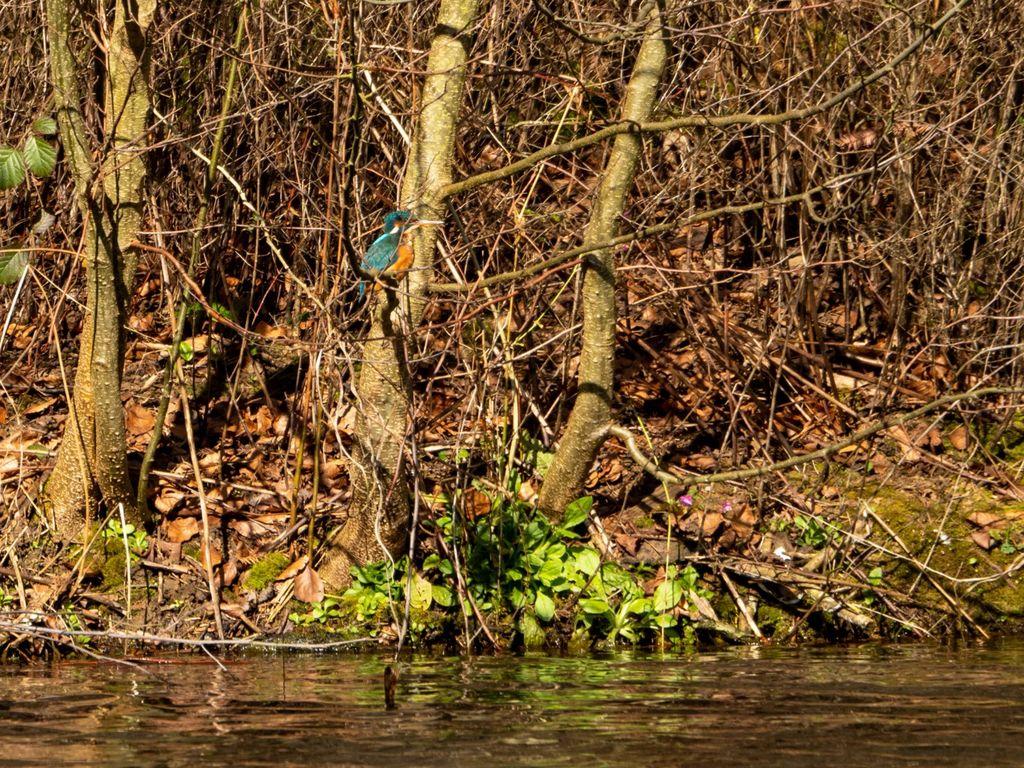 Kingfisher at Farnborough