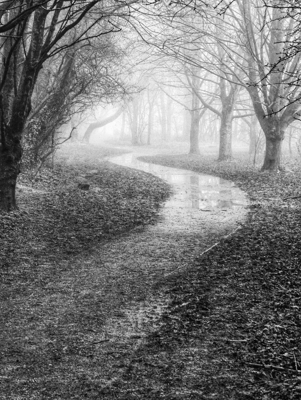 A Misty Morning In Spiceball Park