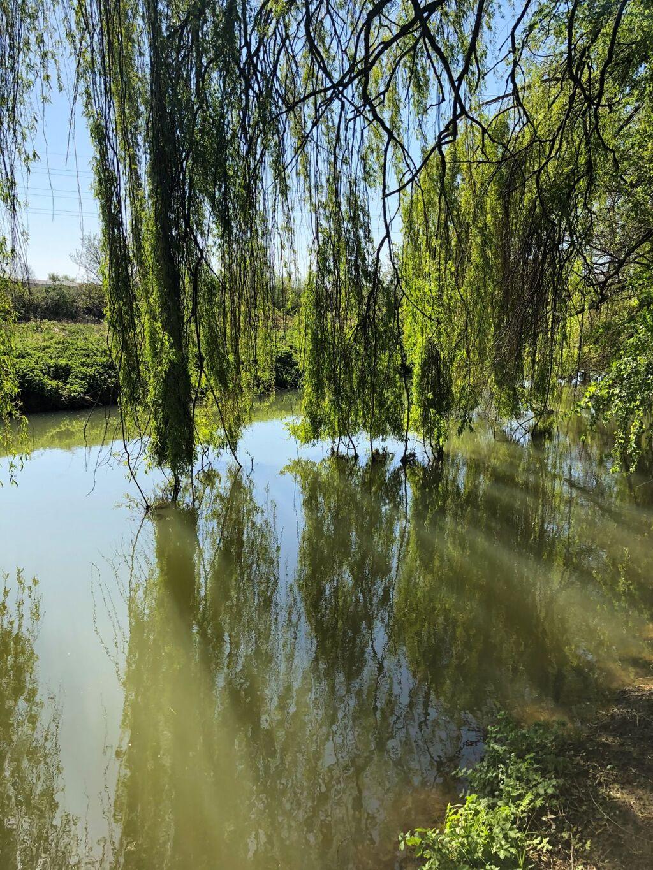 River Cherwell 3