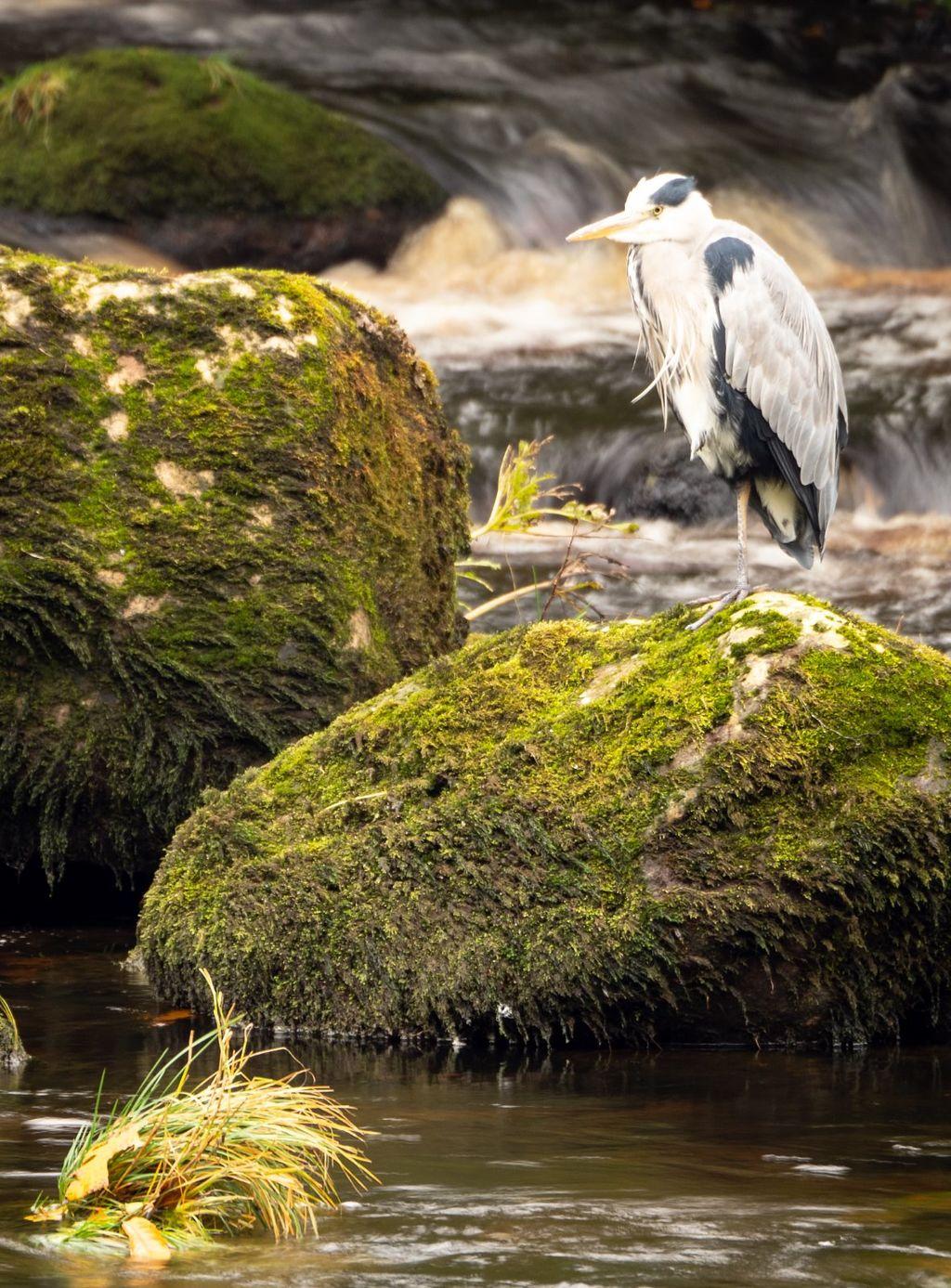 River Wharfe Fisherman