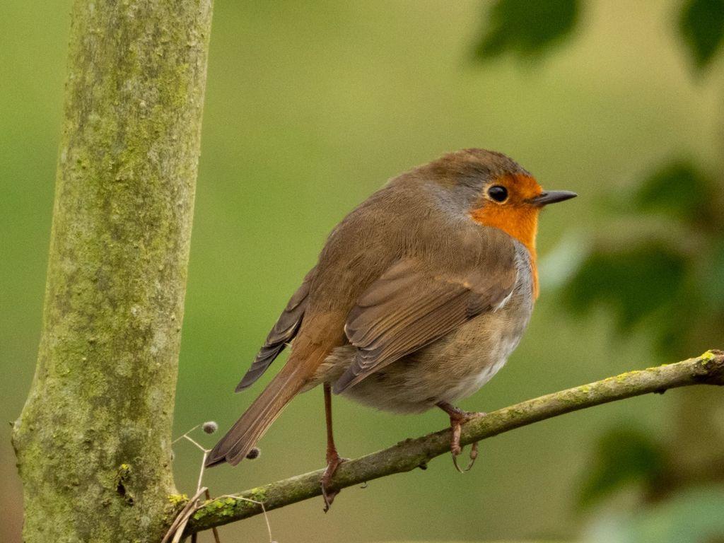 Robin (1) at Adderbury Lakes