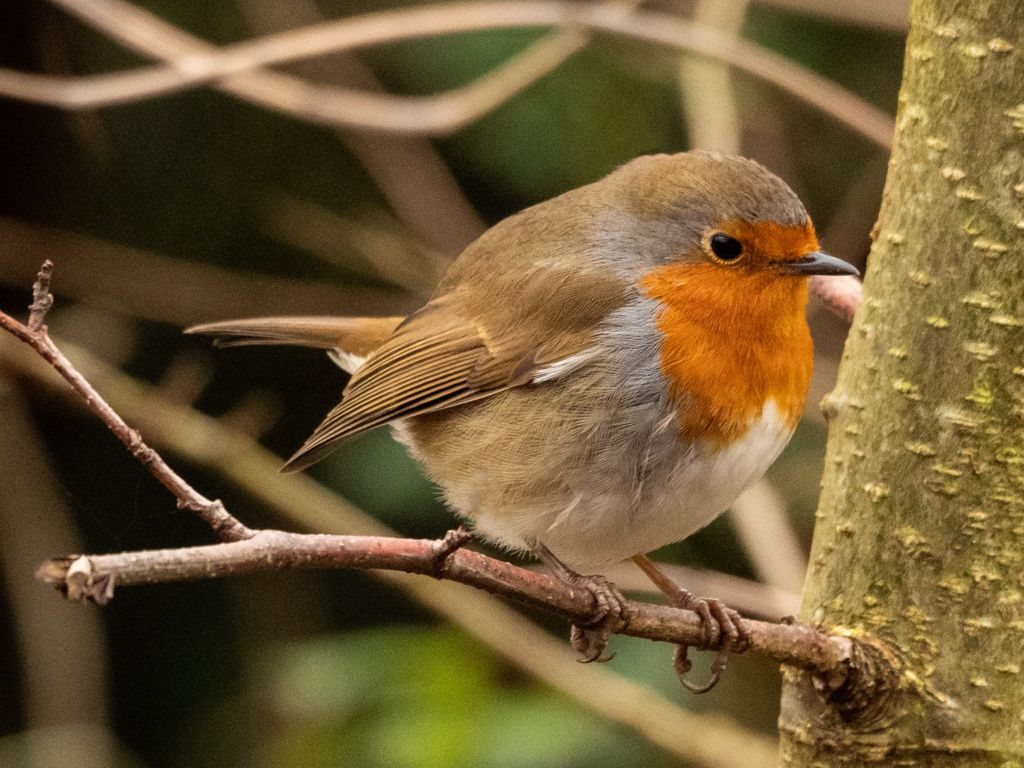 Robin (2) at Adderbury Lakes