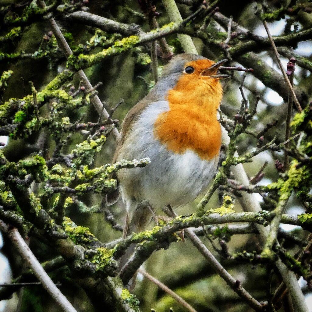 Robin, Spiceball Park