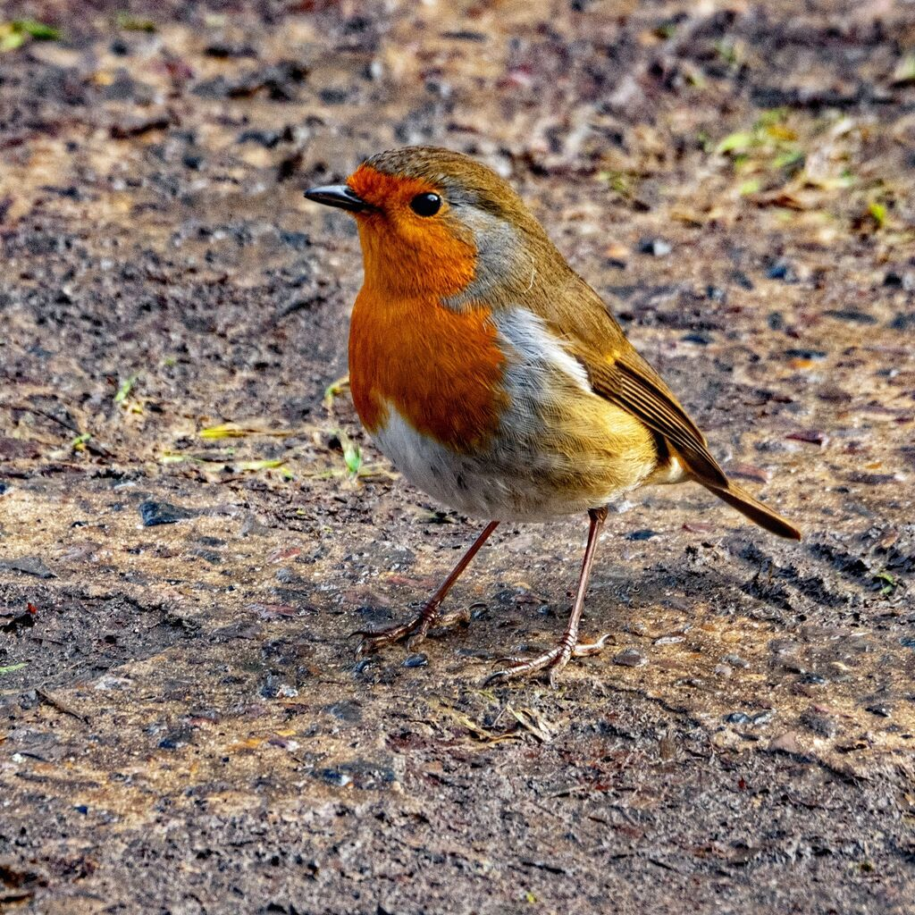 Robin,Spiceball Park