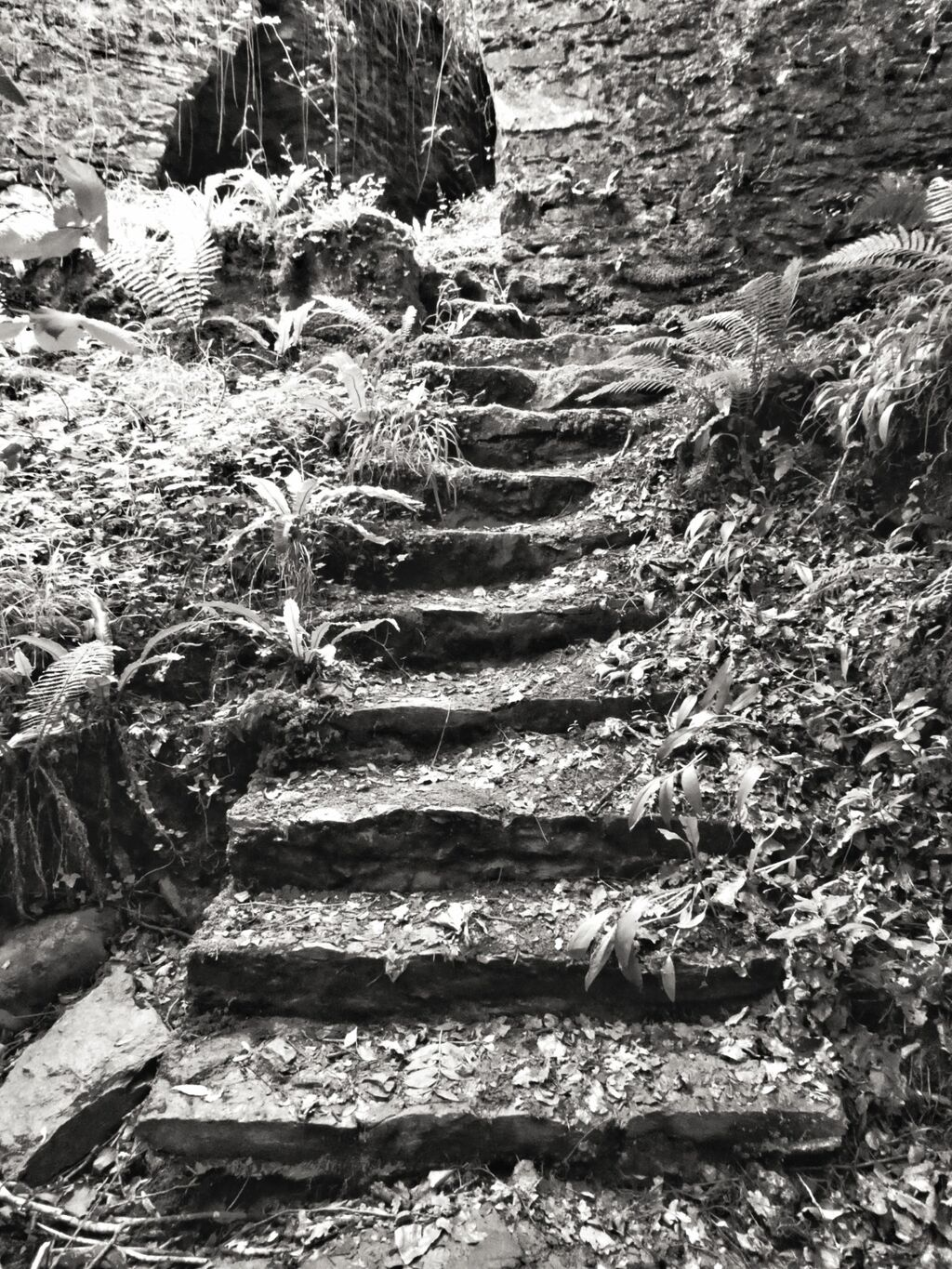 Steps to Nowhere, Watersmeet