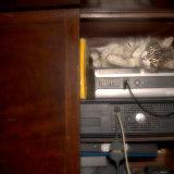 Kitty in the Cupboard
