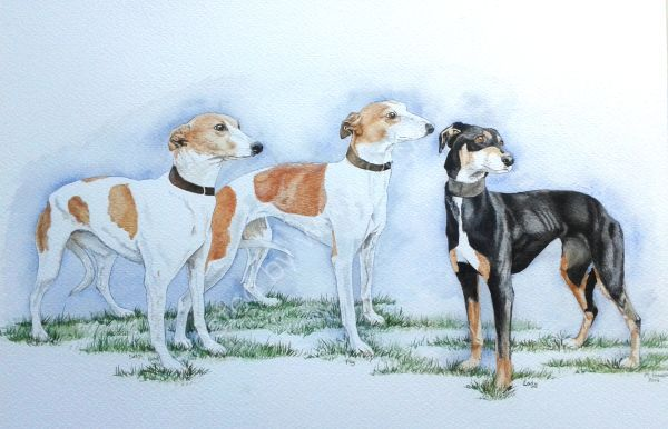 Lovely lurchers
