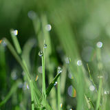 Green grass macro with dew