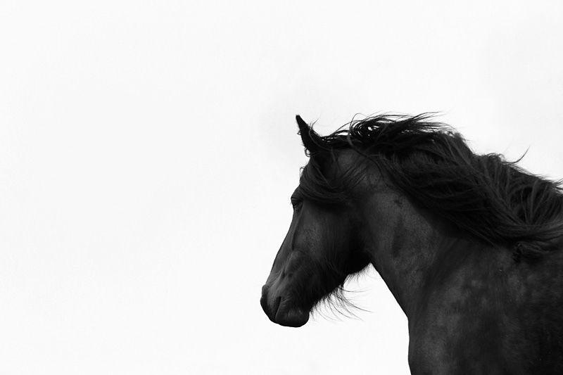 Dales pony