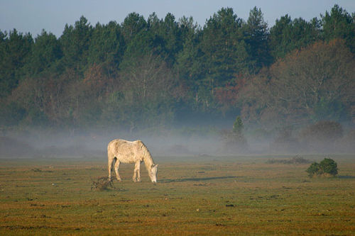Pony in mist