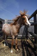 Pony sale