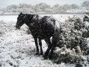 Pony in snowstorm
