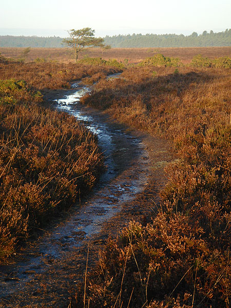 Path across heath