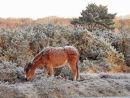Frosty pony