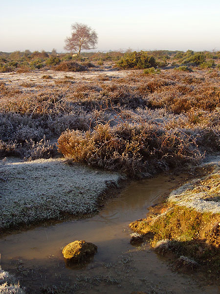 Winter heathland