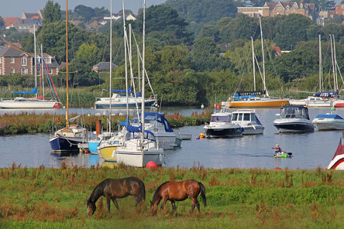 Ponies and canoeist