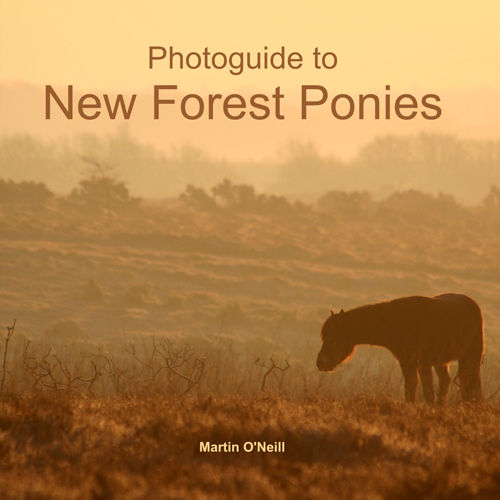 Photoguide to New Forest Ponies