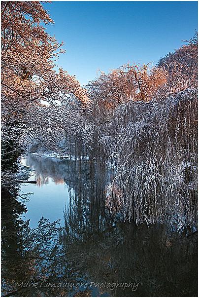 Snowy Bure
