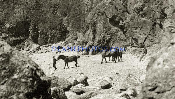 Horses on Petit Bot -1930's - Zoom