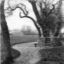 Cambridge-Park-Hutton-3D-Trimon