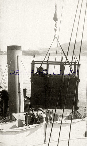 Cow in a crane on the Sark Boat May 1920