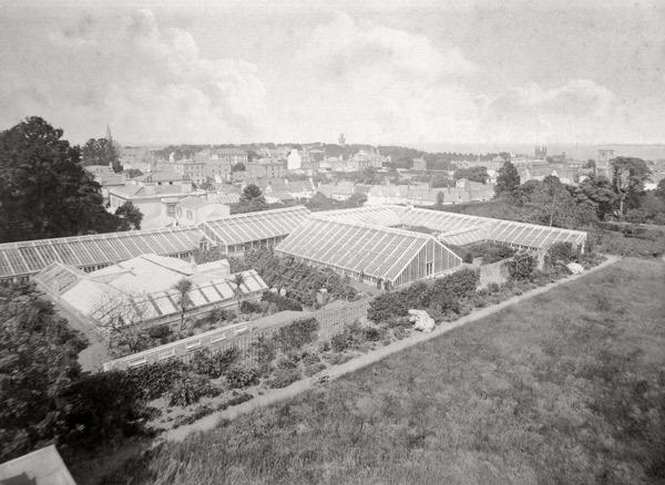 Greenhouses at Saumarez Lodge