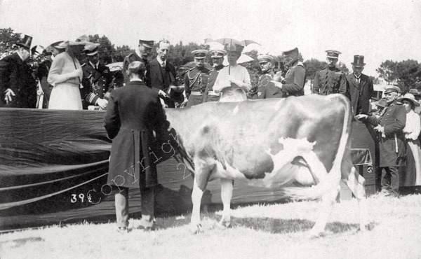 The Acceptance of the Guernsey Cow
