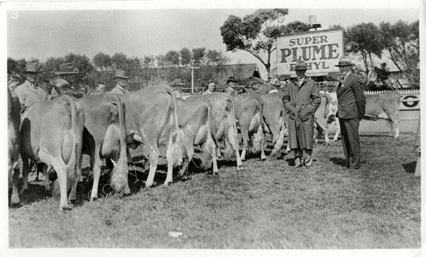 Royal Show Melbourne 1935