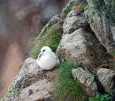 A seabird on St Kilda