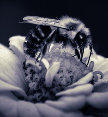 Bee on Flower-Hank Bishop