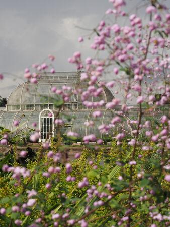 Palm House, Kew - Lynn Saunders
