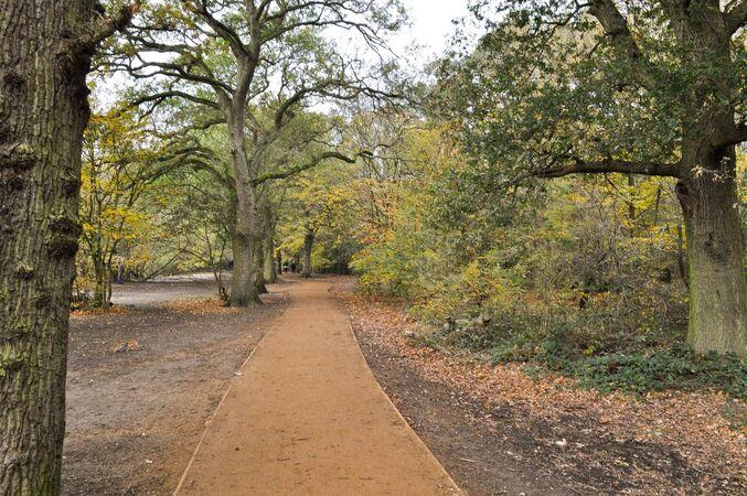 Path through the Trees - Peter Bills