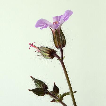 Weed - Chris Saunders