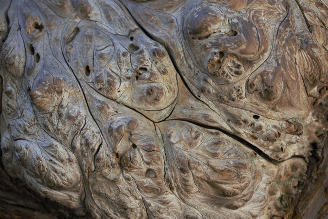 Yosemite Bark - Sue Rosner