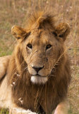 The King of the Mara