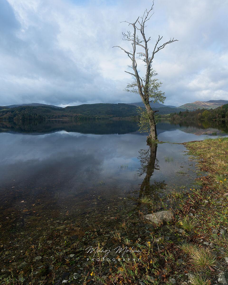 Lone tree, Loch Ard