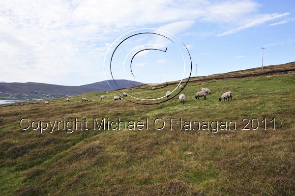 Achill Island, Co. Mayo (Port na hAille) Ref. # DSC2328