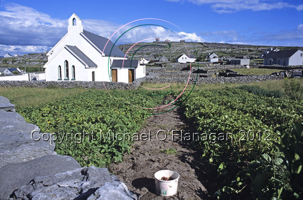 Church and Michael Francis O'Conghaile's Field of Potatoes, Inis Oirr Ref. # F565.5