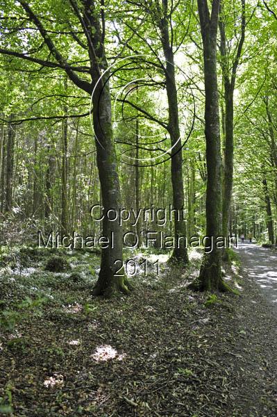 Coole Park, Gort, Co. Galway Ref. # DSC1327