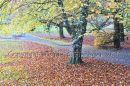 Coole Park, Gort, Co. Galway Ref. # DSC4594