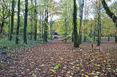 Coole Park, Gort, Co. Galway Ref. # DSC4617