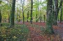 Coole Park, Gort, Co. Galway Ref. # DSC4622