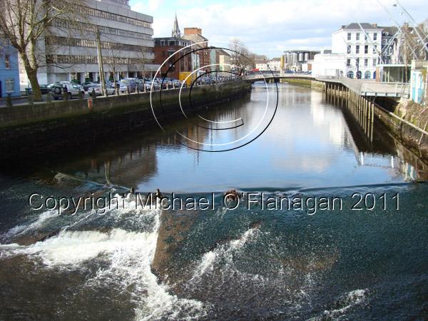 Cork (River Lee) Ref. # DSC02504