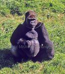 Jersey Island Zoo Ref. # F686.S4.36
