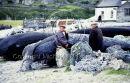 Paddy (C.I.E.) O'Conghaile & Murchadha Choil O'Donnchadha, Inis Oirr (1986) Ref. # F107.7