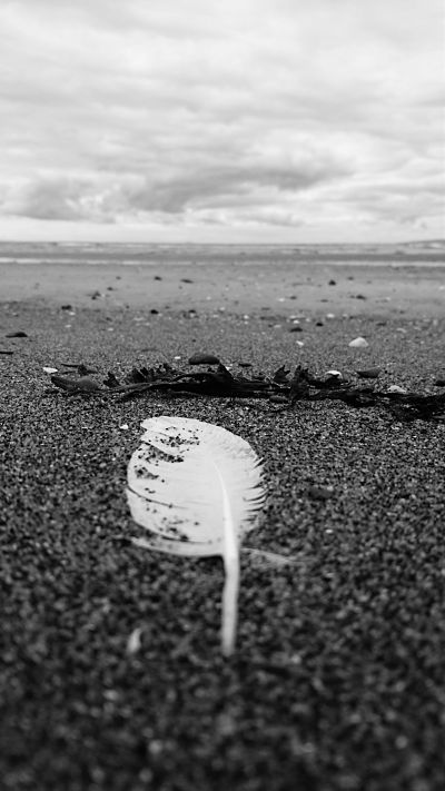 Feather and Seaweed on Irvine beach in Ayrshire